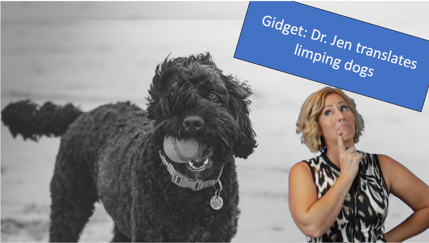 Is this a thing?! Gidget is limping!