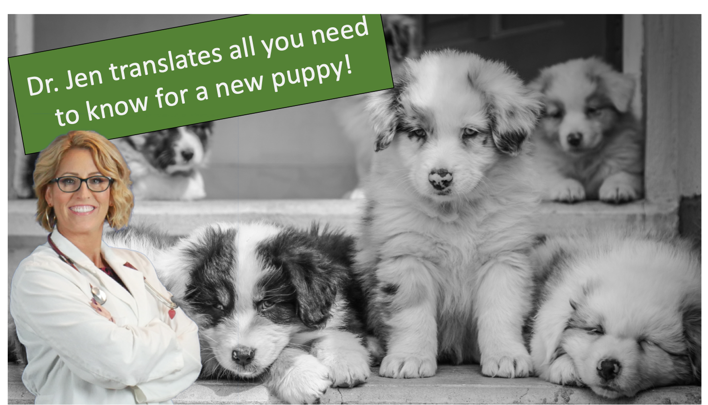 Dr. Jen translates all you need to know for a new puppy!